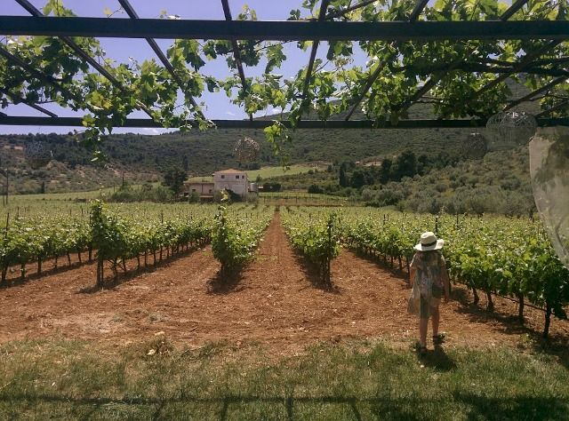 wine tasting in Nemea