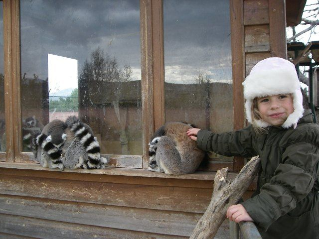 animals in athens with kids © family experiences blog